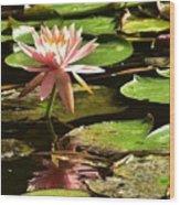 Pink Lily 14 Wood Print