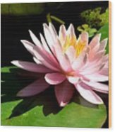 Pink Lily 9 Wood Print