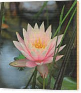 Pink Lily Wood Print