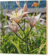 Pink Lily By The Lake Wood Print
