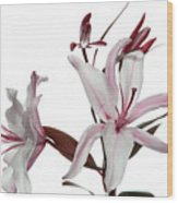 Pink Lily Wood Print