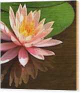 Pink Lily Reflection 4 Wood Print