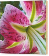 Pink Lily Summer Botanical Garden Art Prints Baslee Troutman Wood Print
