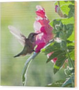 Pink Little Anna's Chupa Sittin In A Flower Wood Print