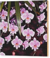 Pink Little Orchids Wood Print