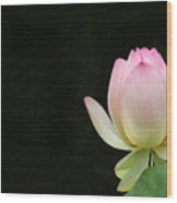 Pink Lotus Bud Wood Print