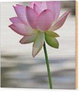 Pink Lotus Vertical Wood Print by Dina Calvarese