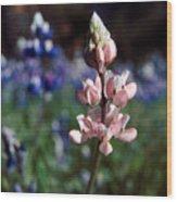 Pink Lupine Figueroa Mountain Wood Print
