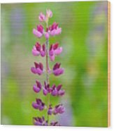 Pink Lupine Wood Print