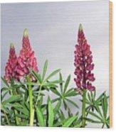 Pink Lupins Wood Print