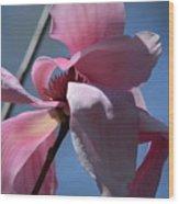 Pink Magnolia Closeup Wood Print