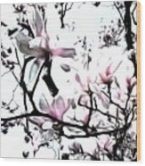 Pink Magnolia - In Black And White  Wood Print