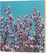 Pink Magnolia Splendor Wood Print
