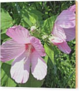 Pink Marsh Mallow Wildflower Wood Print