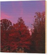 Pink Moonlite Night Wood Print