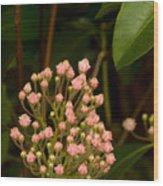 Pink Mountain Laurel Buds Wood Print