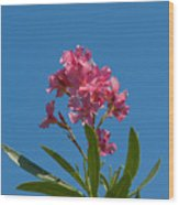 Pink Oleander Flower In Spring Wood Print