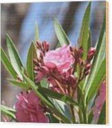 Pink Oleander IIi Wood Print
