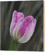 Pink On Display Wood Print