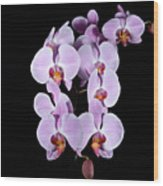 Pink Orchid Iv Wood Print