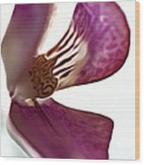 10555 Pink Orchid Wood Print