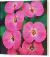 Pink Orchid Crown Of Thorns Wood Print