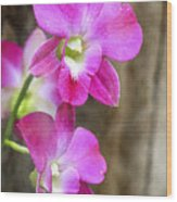 Pink Orchid Duo Wood Print