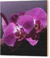 Pink Orchid Flowers Wood Print