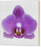 Pink Orchid On White Wood Print