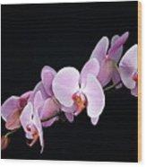 Pink Orchid Viii Wood Print