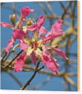 Pink Orchid Tree Wood Print