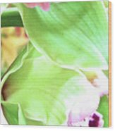 Pink Orchid With Green 1 Wood Print