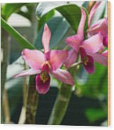 Pink Orchids - Exotic Tropical Glow Wood Print