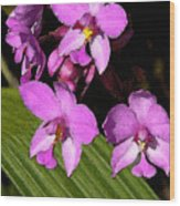 Pink Painted Orchids Wood Print
