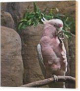 Pink Parrot Nibbling Foot Wood Print
