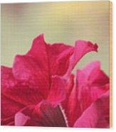 Pink Passion Petunia Wood Print