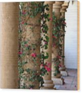 Pink Peacock Colored Bougainvillea Blossoms Climbing Pillars Photograph By Colleen Wood Print