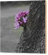 Pink Peeking At You Wood Print