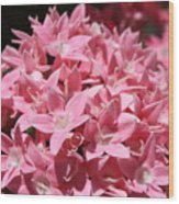 Pink Pentas Beauties Wood Print