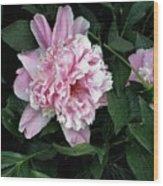 Pink Peone Wood Print