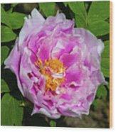 Pink Peony Blossom Wood Print