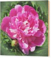 Pink Peony On Green Wood Print