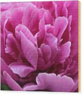 Pink Peony Watercolor Wood Print