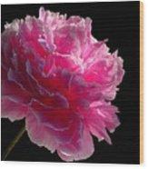 Pink Peony On A Black Background Wood Print