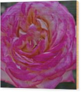 Pink Perfection Wood Print