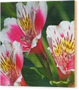 Pink Peruvian Lily 2 Wood Print