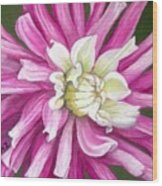 Pink Petal Blast Wood Print