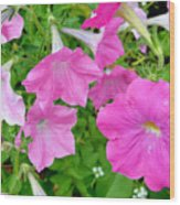 Pink Petunia Flower 11 Wood Print