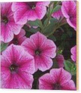 Pink Petunia Wood Print