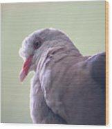 Pink Pigeon Nesoenas Mayeri Wood Print